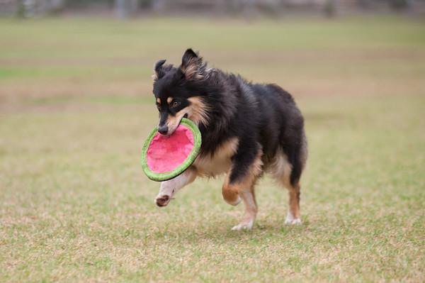 Arroyo Verde Dogs 8-21-2015