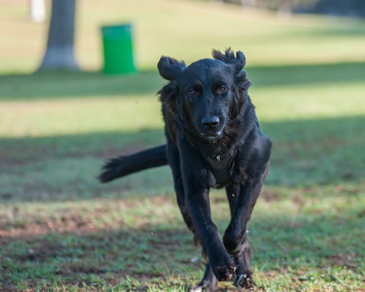 Arroyo Verde Park Dogs 8-27-2015