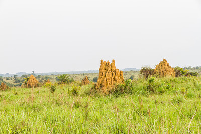 The savannah area between Odzala Wilderness Mboko and Lango camps is heavily populated with massive termite mounds. Odzala-Kokoua National Park, Republic of Congo