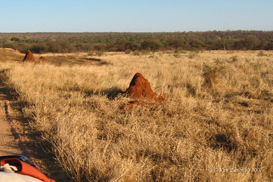 Termite Mounds along side the road, a fairly common sight.