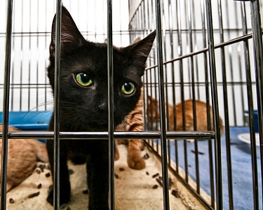 New Kittens for fall 2009 call or visit the Shelter for info.   89 Mill Road North Haven, Connecticut 06473 203-239-2641
