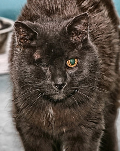 Cloudy.. one eyed fluff ball..  call or visit the Shelter for info. 89 Mill Road North Haven, Connecticut 06473 203-239-2641