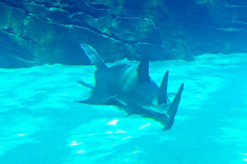 Georgia Aquarium-4082