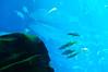 Georgia Aquarium-4101