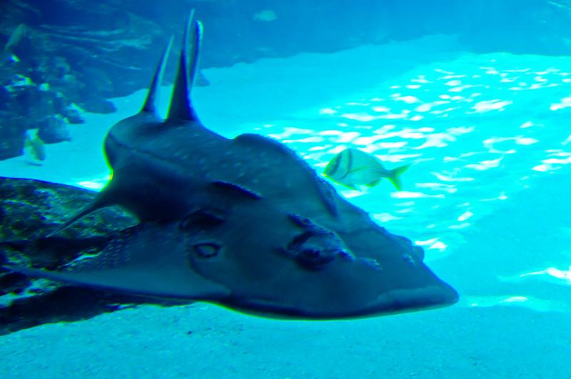 Georgia Aquarium-4089