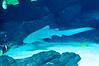 Georgia Aquarium-4094
