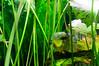 Georgia Aquarium-4155