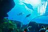 Georgia Aquarium-4097