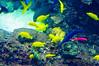 Georgia Aquarium-4073