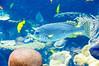 Georgia Aquarium-4071