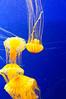 Georgia Aquarium-4065