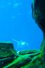 Georgia Aquarium-4100