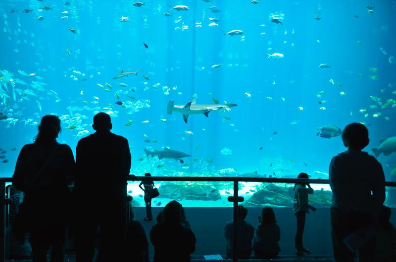 Georgia Aquarium-4103