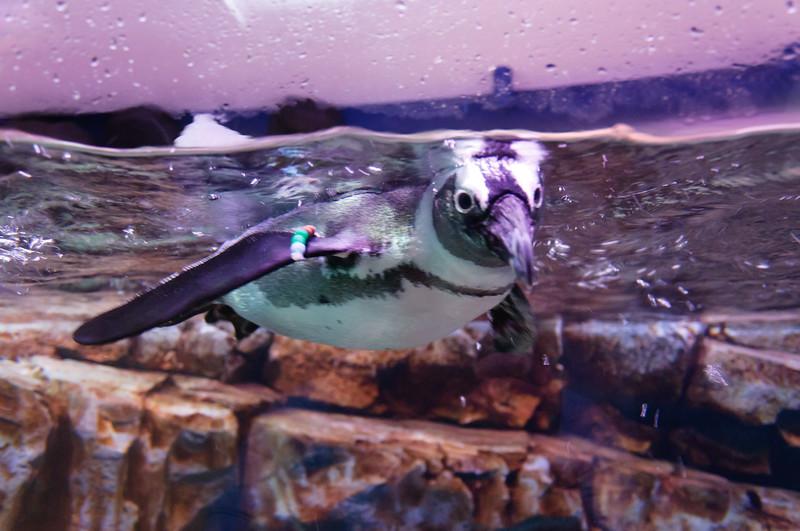 Georgia Aquarium-4144