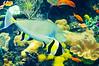 Georgia Aquarium-4070