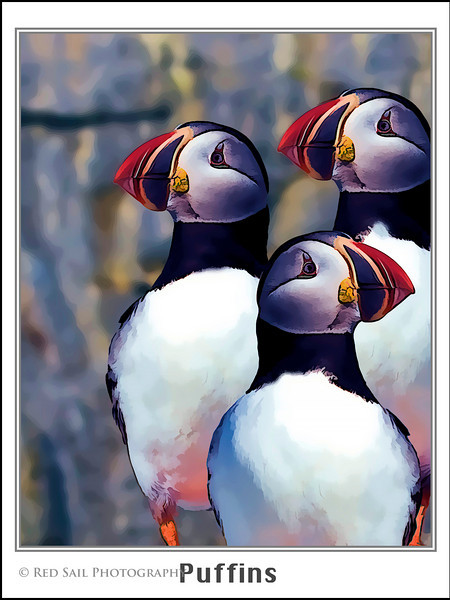 Puffin Poster. Artistic filters applied. This is available in two sizes, 18x24 or 9x12.