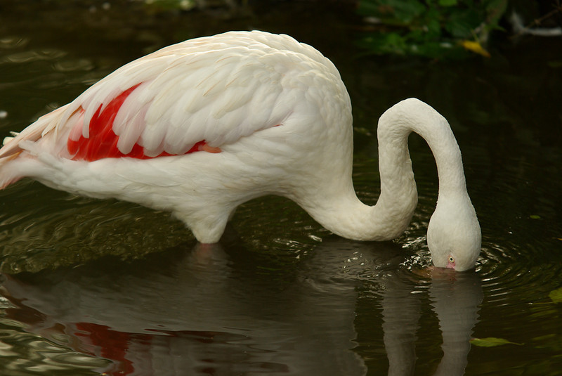 Un Flamant Rose