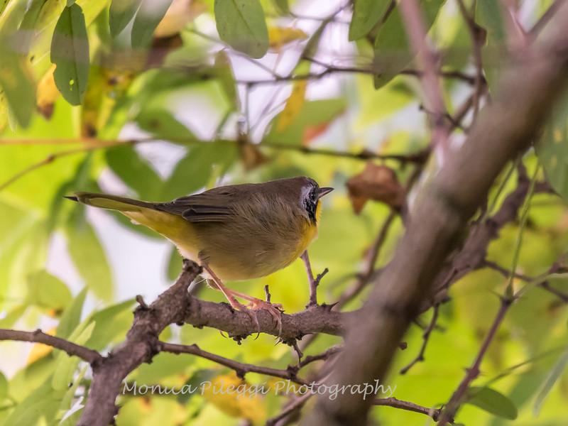 Audrey Carroll Audubon Sanctuary-3Sep2017-5927