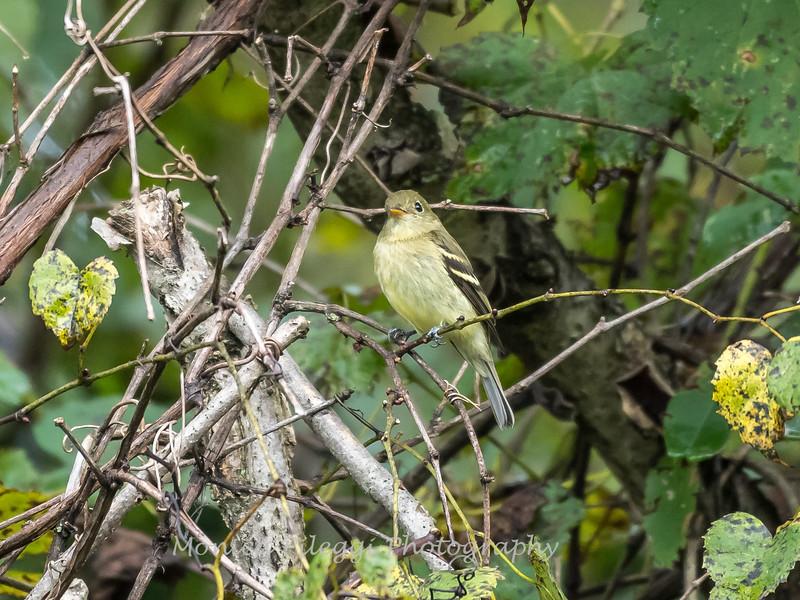 Audrey Carroll Audubon Sanctuary-3Sep2017-5898