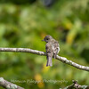 Audrey Carroll Audubon Sanctuary-3Sep2017-5986