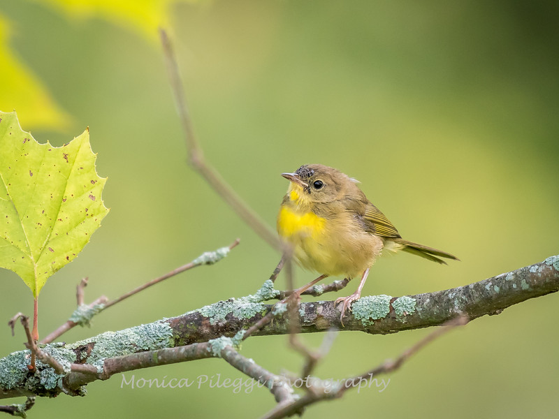 Audrey Carroll Audubon Sanctuary-3Sep2017-5960