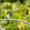 Audrey Carroll Audubon Sanctuary-3Sep2017-5981
