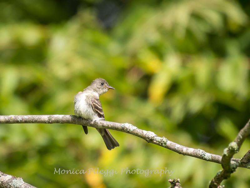 Audrey Carroll Audubon Sanctuary-3Sep2017-5992