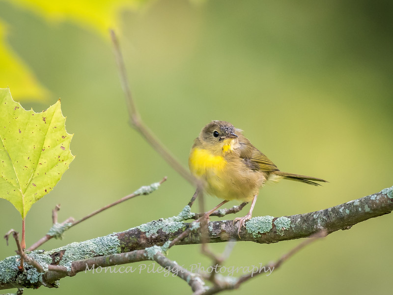 Audrey Carroll Audubon Sanctuary-3Sep2017-5957