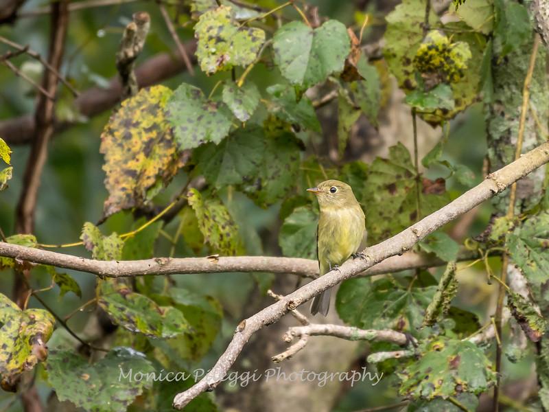 Audrey Carroll Audubon Sanctuary-3Sep2017-5875