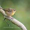 Audrey Carroll Audubon Sanctuary-3Sep2017-5971