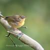 Audrey Carroll Audubon Sanctuary-3Sep2017-5969