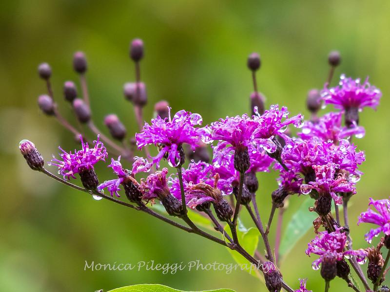 Audrey Carroll Audubon Sanctuary-3Sep2017-5822