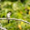 Audrey Carroll Audubon Sanctuary-3Sep2017-5980