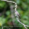 Audrey Carroll Audubon Sanctuary-3Sep2017-5968