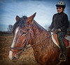 Ellen Spector  CEP Horse - Ellen + Lr4 adjust