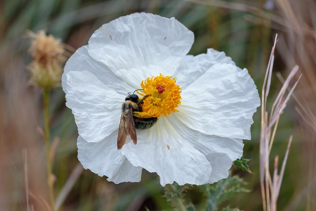 IMAGE: https://photos.smugmug.com/Animals/Austin-Area-Wildlife-Excursion/i-S7zcbVS/0/415e44bd/XL/IMD_1439-XL.jpg