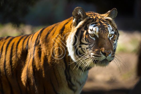 Austin Zoo 20140217