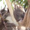 Lazy coalas