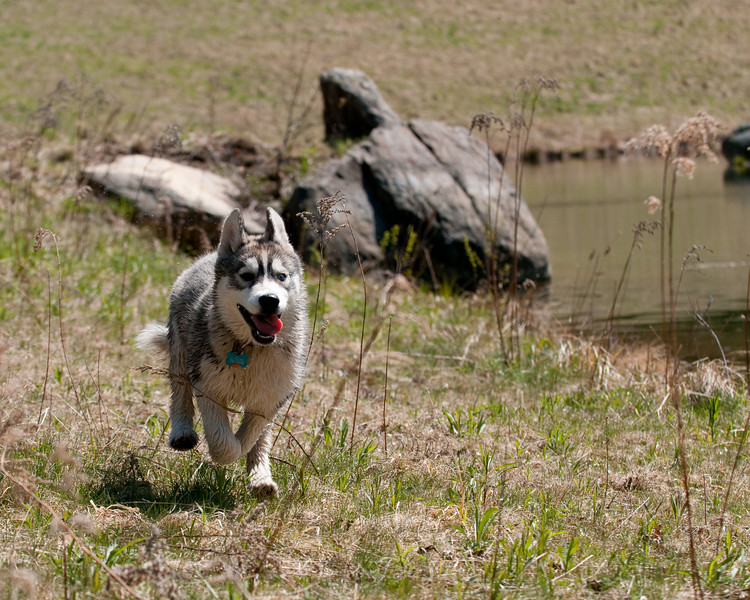 Zoe romps near the pond<br /> 4/24/10