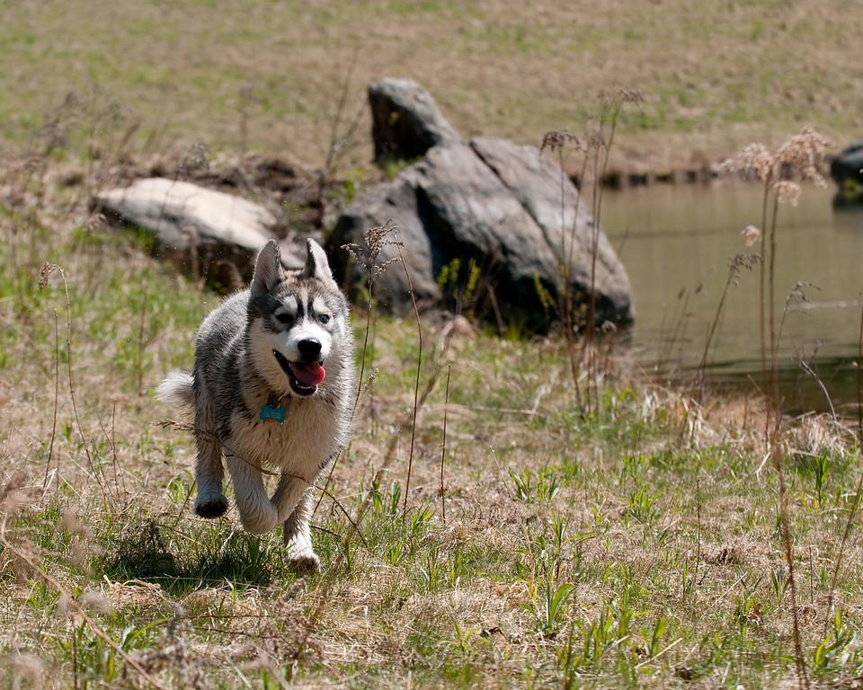 Zoe romps near the pond<br /> 4/24/10