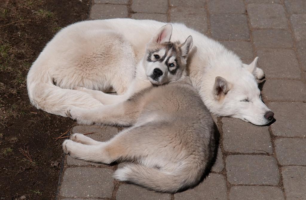 Sleeping dogs 3
