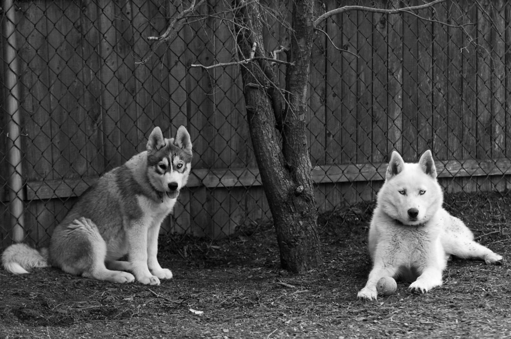 Ava & Zoe pose in B&W<br /> 4/20/10