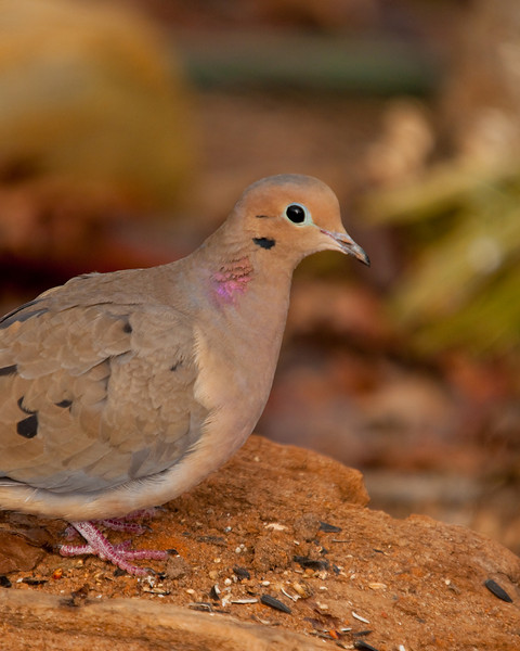 a dove keeps an eye on the camera.