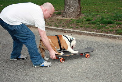 Patrick Clemens helping Beefy the skate-boarding bulldog.