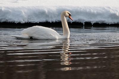Reinsvoll   28/02/2016   --- Foto: Jonny Isaksen