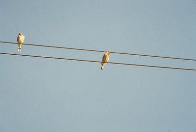 8/18/04 House Finch (Carpodacus mexicanus). Merced Valley Grasslands, CA