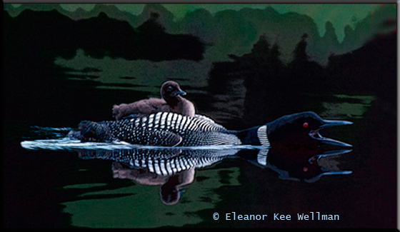 Loon Calling with Chick on Back<br /> Photographic Art