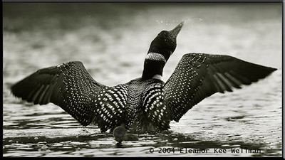 Wing Flap with Chick - Sepia