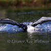 Wing Swimming #2