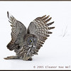Great Gray Owl on Mouse<br /> 16049